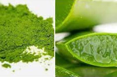 Lô hội kết hợp trà xanh