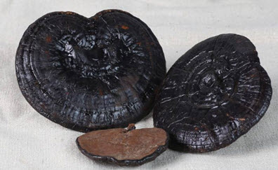 Nấm linh chi đen